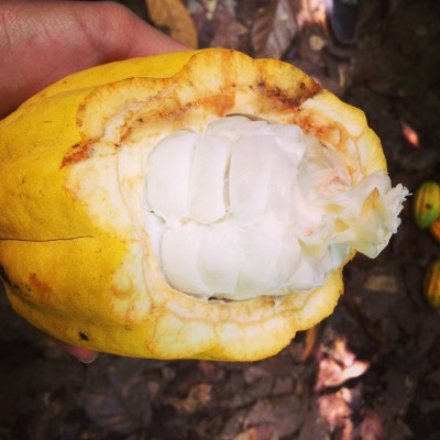 Dominican Series: Organic Cacao Farm