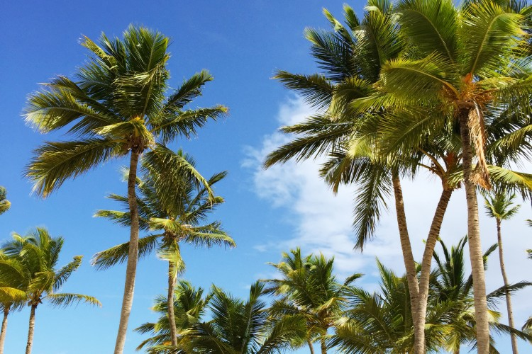 Dominican Republic: The Best Escape Spot