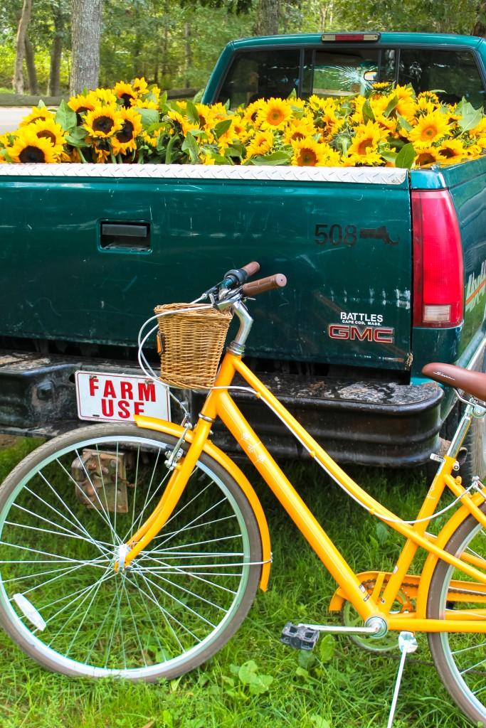Schwinn Bike and Morning Glory Farm